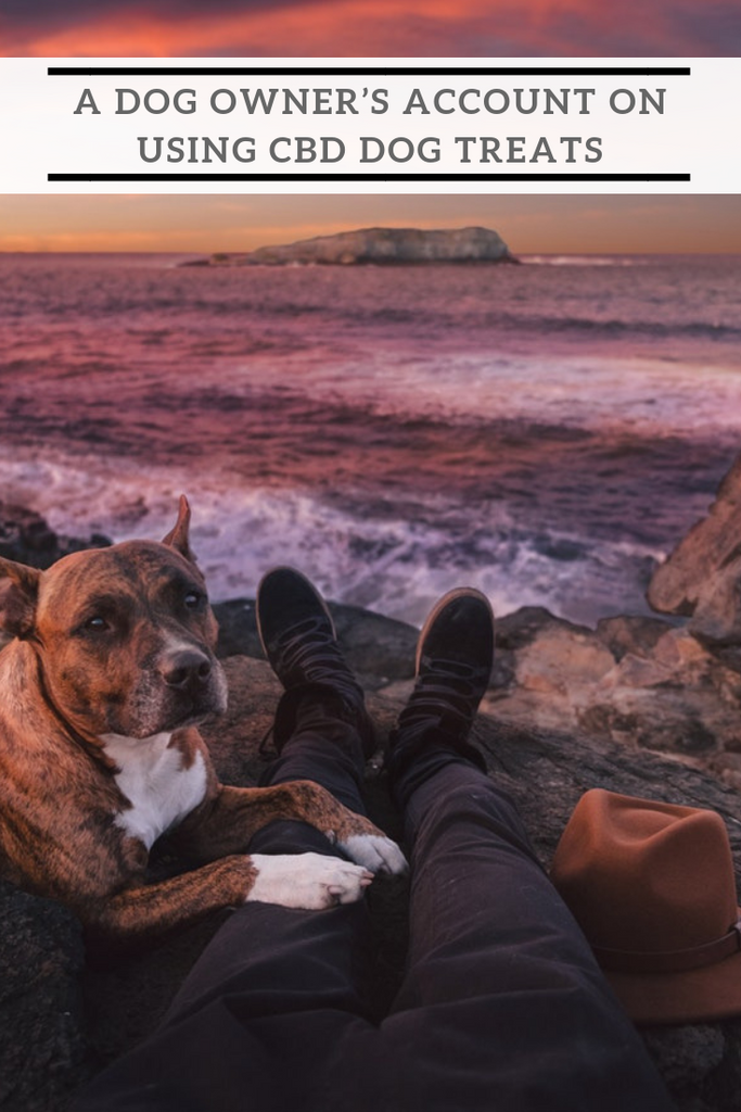 A Dog Owner's Account on Using CBD Dog Treats