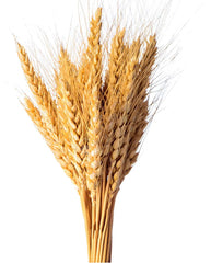 wheat stocks
