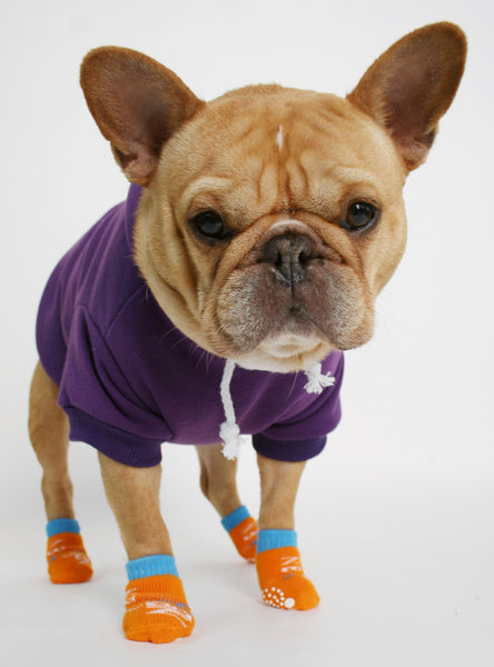 THE TANGERINE DOG SOCKS