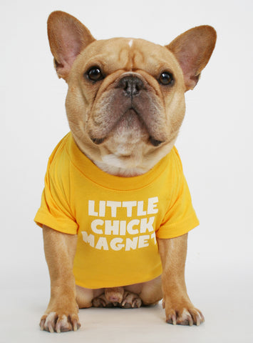 Little Chick Magnet Dog Tee