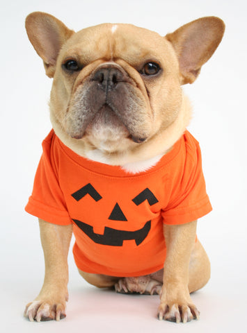 Pumpkin Head Dog Tee
