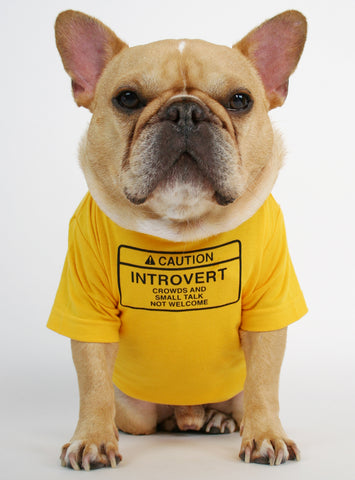 Caution Introvert Dog Tee