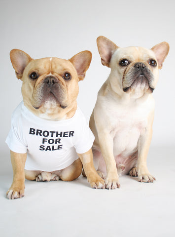 BROTHER FOR SALE DOG TEE