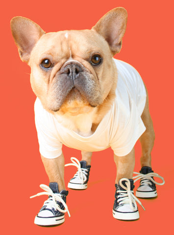 Converse Chunk Taylor Dog Shoes