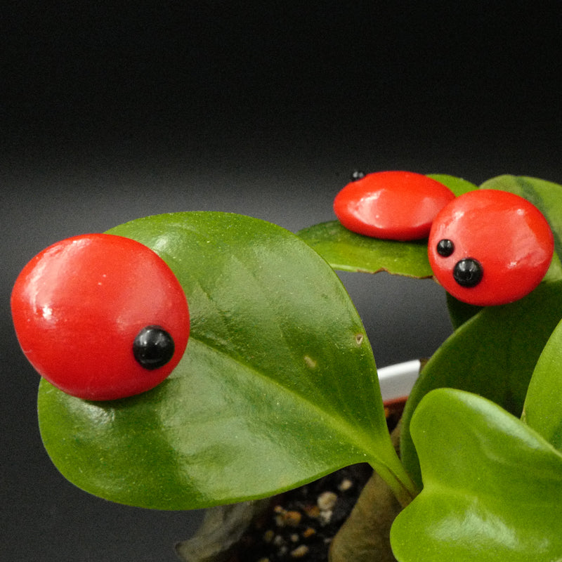 amare wear - ladybug handmade earrings