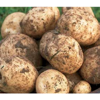 Annie's Farm Organic Potatoes 1.5 kg - Annie's Farm Produce