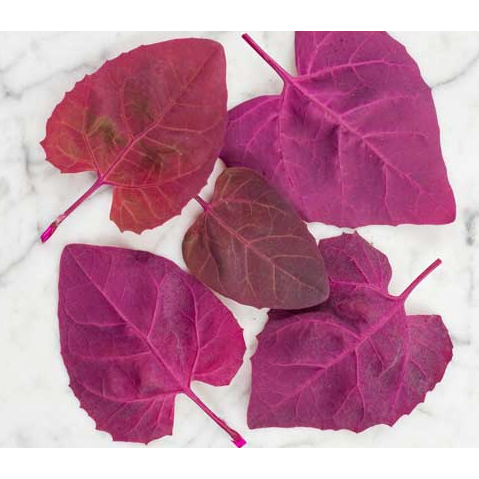 Fresh Organic Red Orach - Annie's Farm Produce