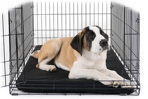 Dog Doza - Waterproof Crate / Cage Mats - Zip Off Covers