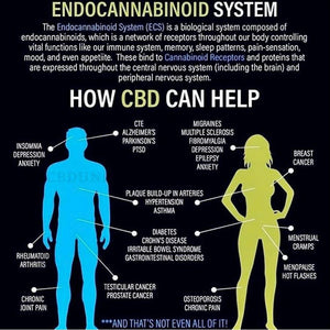 Your Endocannabinoid System 101
