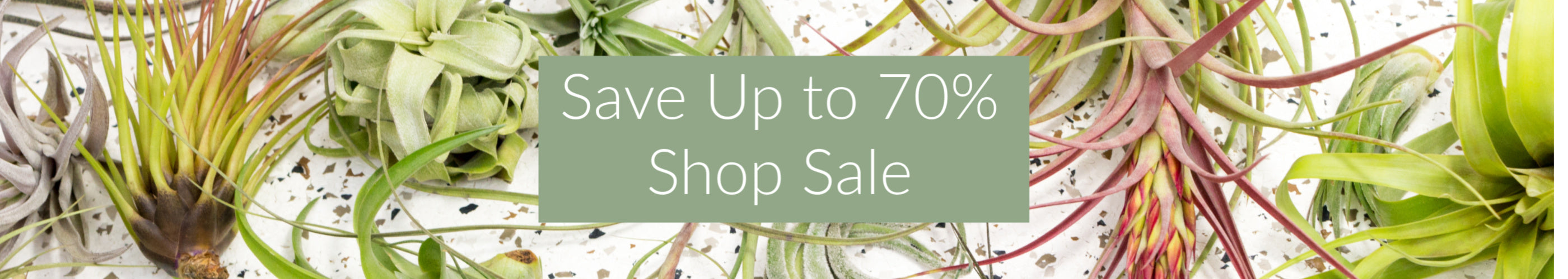 Save up to 70% On Air Plants