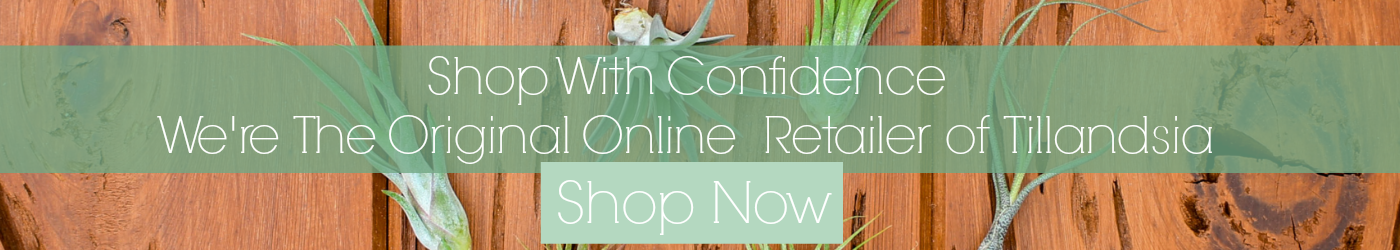Shop with Confidence - We're The Original Online Retailer of Tillandsia