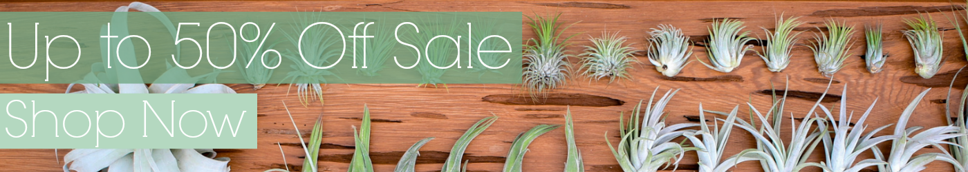 Up to 50% Off Air Plant Tillandsia Sale