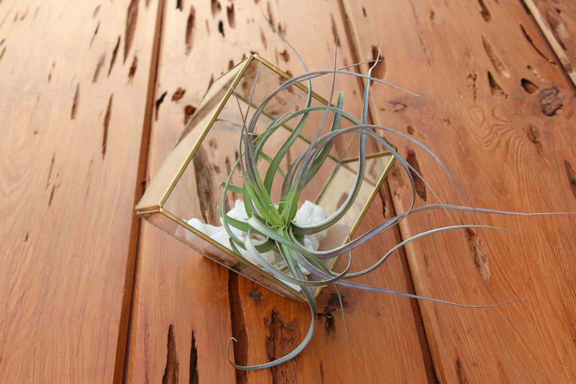 Heptahedron Geometric Glass Terrarium, Crushed Rose Quartz & Custom Tillandsia Air Plant