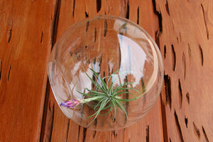 Large Glass Terrarium with 2 Open Ends