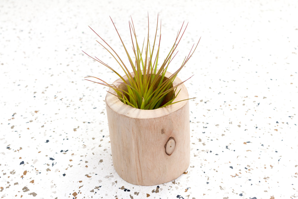 Wooden Driftwood Container [Now Available in Two Sizes]