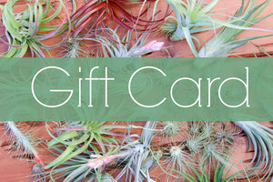 Air Plant City Gift Card