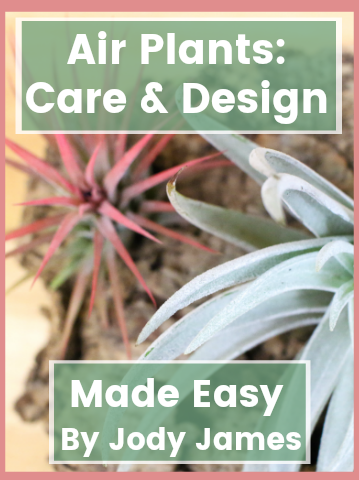 Air Plant Care - How To Care For Tillandsia – Air Plant City