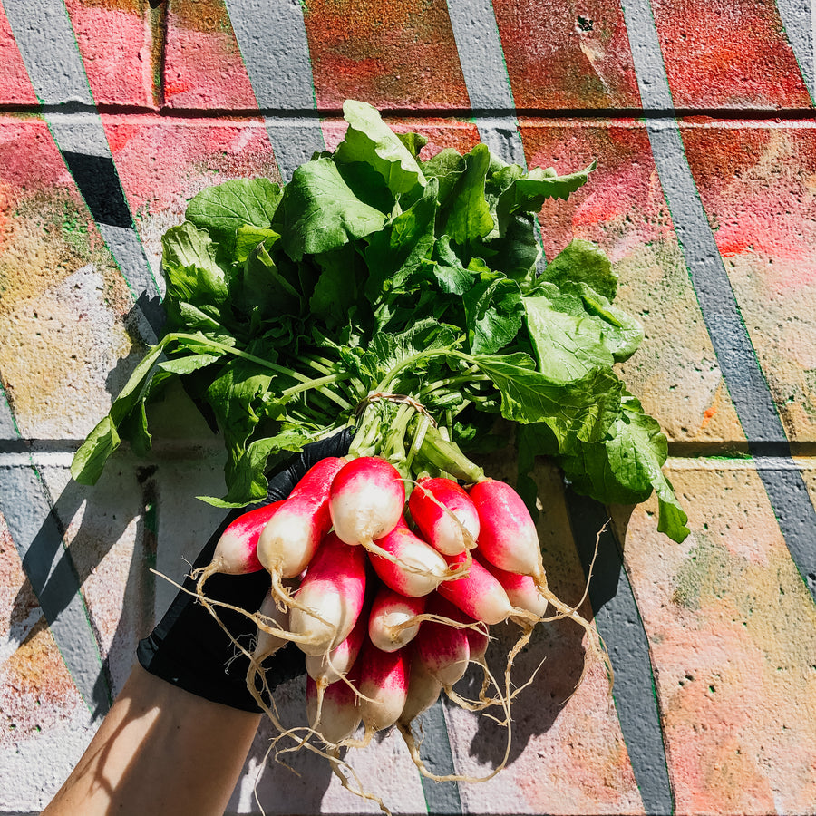 French Breakfast Radishes (Bunch)