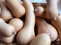 Winter Squash, Butternut