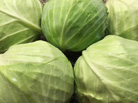 Cabbage, Common Green