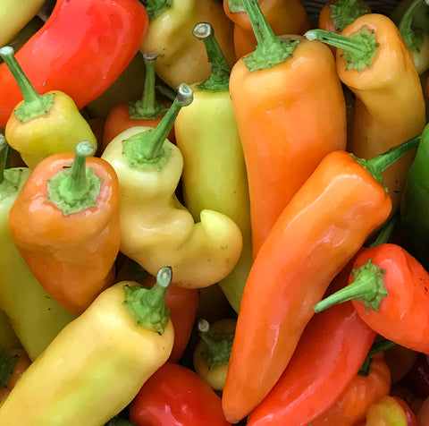 Pepper, Hungarian Hot Wax