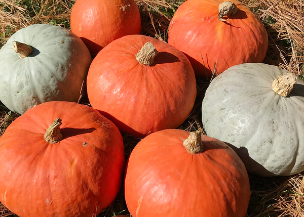 Winter Squash, Kabocha