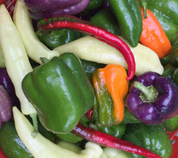Peppers, Sweet Mix