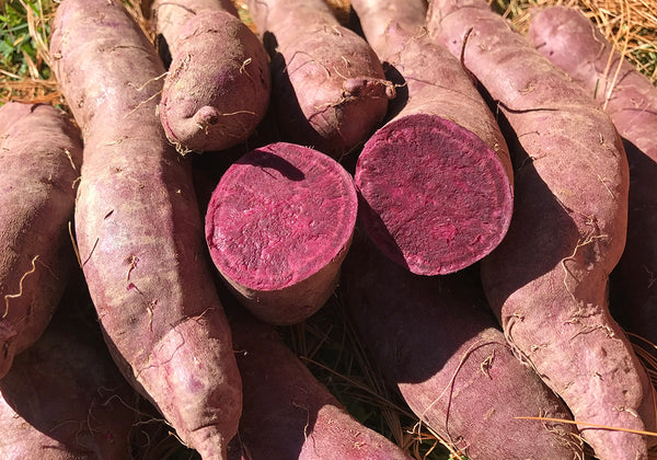 Sweet Potato, Okinawan Purple