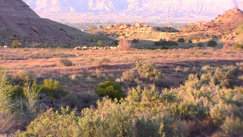 Grand Junction Colorado Water Quality Report Lead Chlorine Fluoride Safe Safety tap