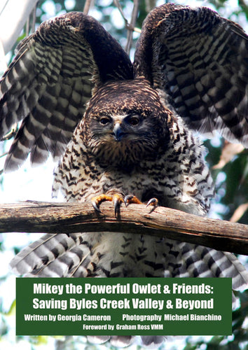 NEW POSTER - Solomon the Powerful Owl - Poster (price includes domestic postage & handling)