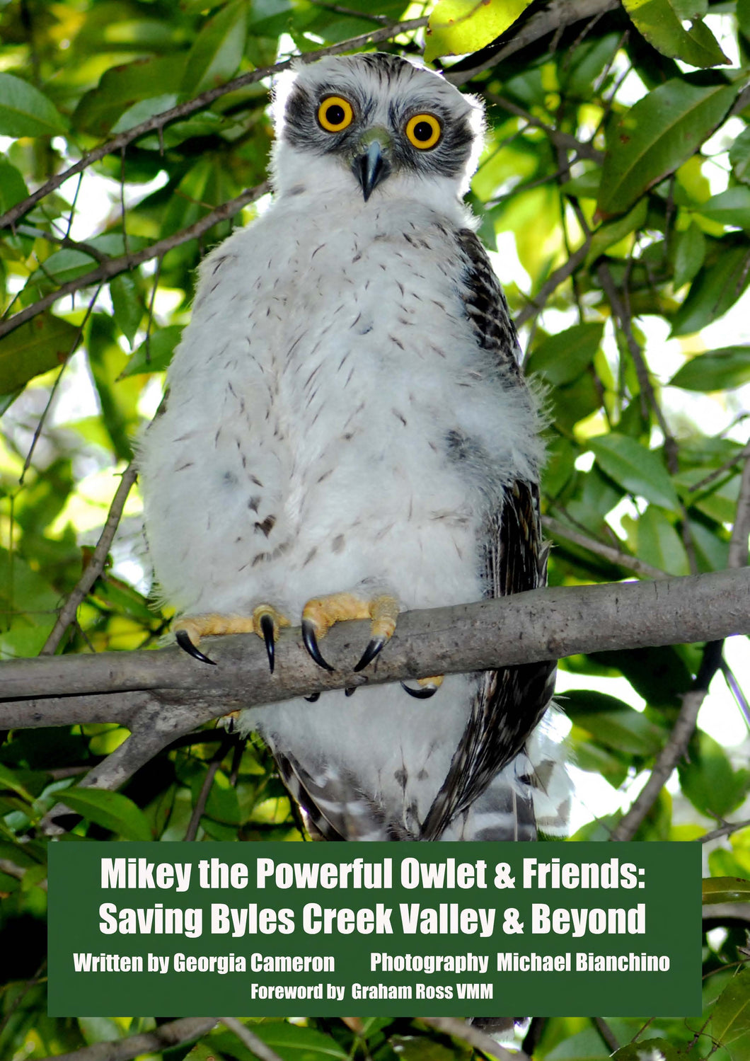 SOLD OUT SECOND POSTER - Mikey the Powerful Owlet - Poster (price includes domestic postage & handling)