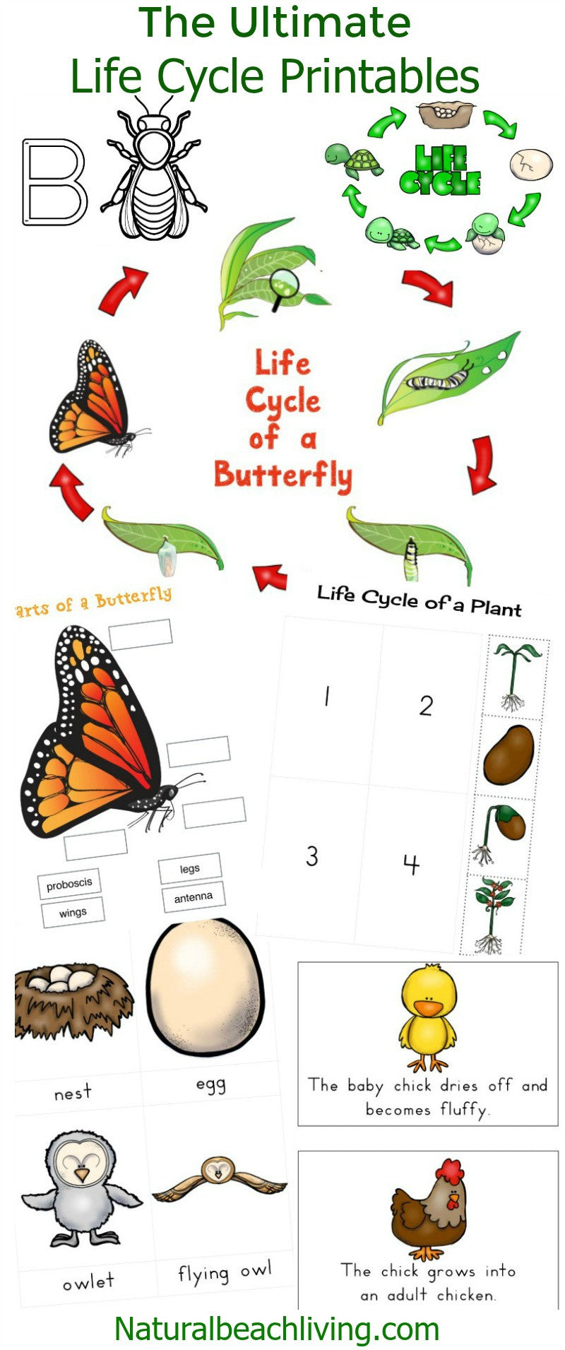 the ultimate life cycle printables natural beach living