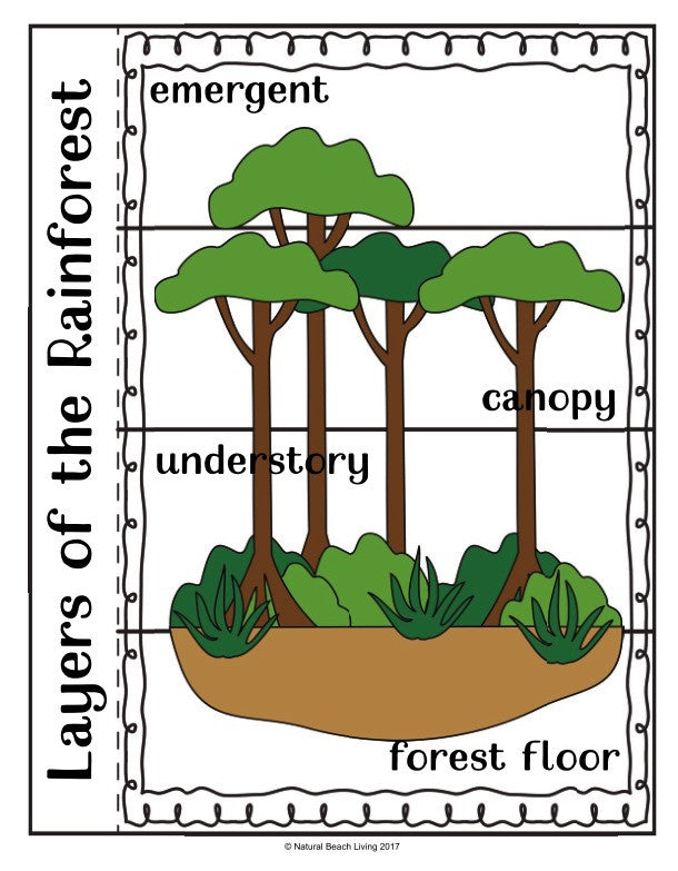 graphic about Layers of the Rainforest Printable known as The Least difficult Rainforest Young children Publications - Organic and natural Beach front Dwelling