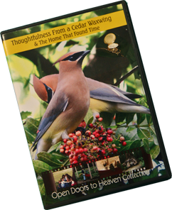 C3 - Thoughtfulness From a Cedar Waxwing & The Home That Found Time, DVD