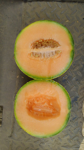 Why do Melons get married?