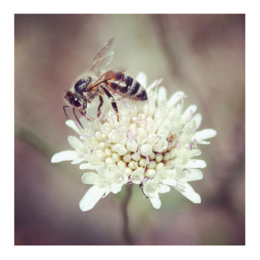 Busy Reignbow Bee and Flower Photo Print