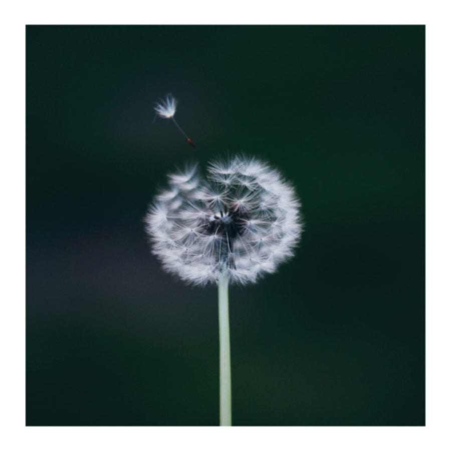 Dandy Lyin' Reignbow Flower Photo Print