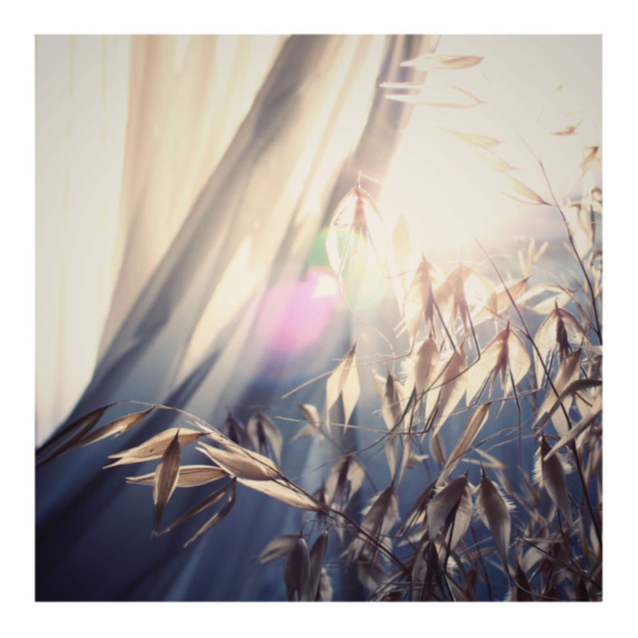Dawn Reignbow Wheat Photo Print