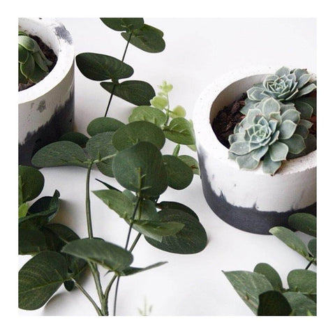Concrete Succulent Pot - Medium by Whitewick Home