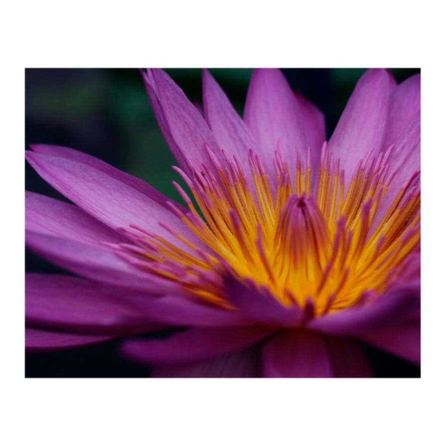 Fever Reignbow Flower Photo Print