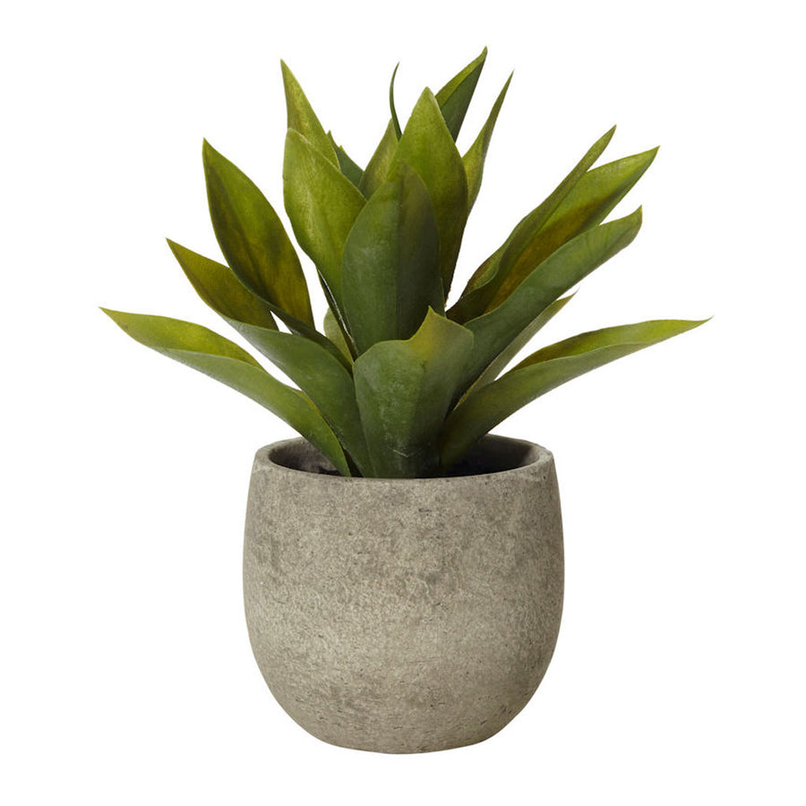 Plants Rogue African Agave in Tub Pot 71.2063.15