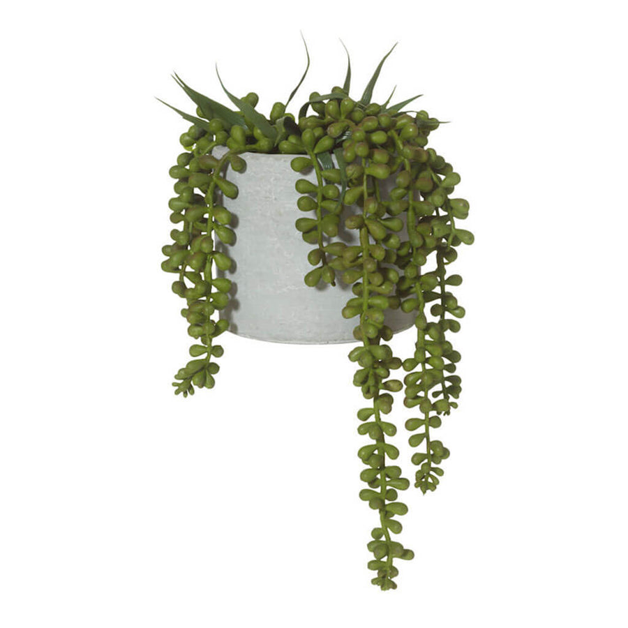 Plants Rogue String of Pearls in Concrete Pot 73.536.12