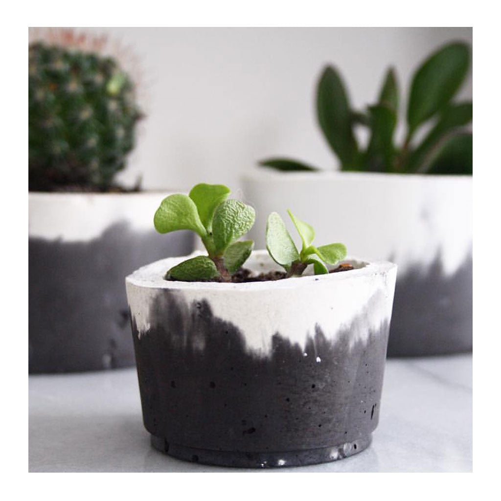 Concrete Succulent Pot - Small, Charcoal