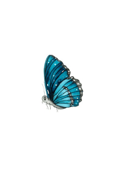 Forever Blue Butterfly