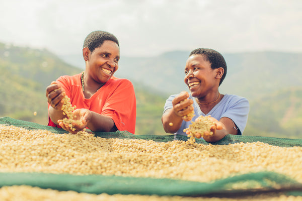 coffee washing rwanda jula project