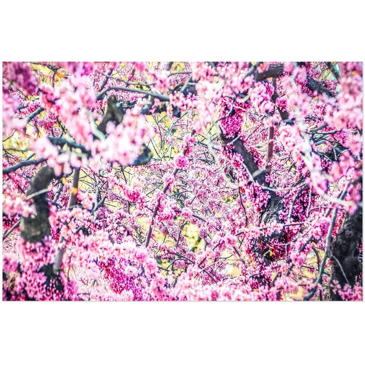 Spring Blossoms | Acrylic Print