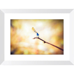 Friendly Bugger | Framed Print