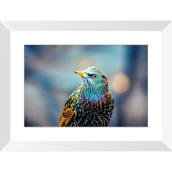European Starling | Framed Print