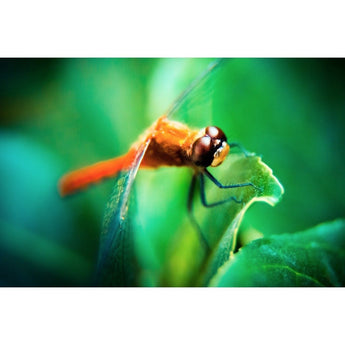 The Dragonfly | Metallic Print