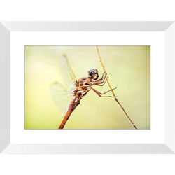 Metallic Dragonfly | Framed Print